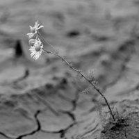 Засуха. :: Николай Емелин