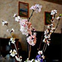 Весна в Севастополе... :: Кай-8 (Ярослав) Забелин