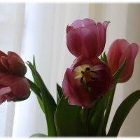 Малютки феи спят в цветах тюльпана.... :: Tatiana Markova