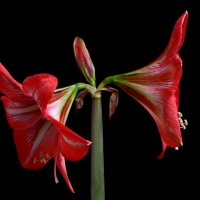 Red&Black :: Александр Корсиков