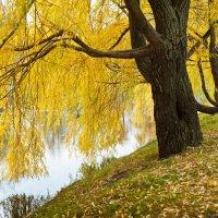 Осенние наряды :: Борис Руненко