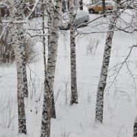 Снег в феврале :: Олег Афанасьевич Сергеев