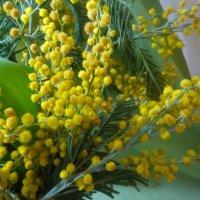Солнечное поздравление... :: Тамара (st.tamara)