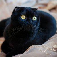 Моя кошка :: Ольга Геращенкова