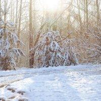 Первый снег. :: Борис Руненко