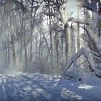 В Загородном парке! :: Владимир Шошин