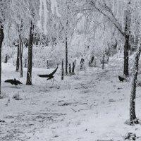 Зимняя графика :: Павел Лушниченко