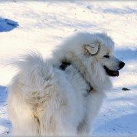 Снежок. :: Александр Шимохин