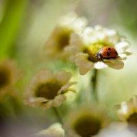 весна... :: Svetlana