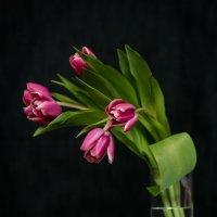 Тюльпаны... :: Алексей le6681 Соколов