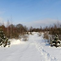 Снежный февраль :: Милешкин Владимир Алексеевич