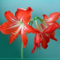 Яркое цветение :: Нина Синица