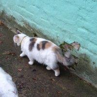 Кошка :: татьяна