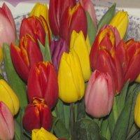 Ах,эти первые тюльпаны природы искренний подарок! :: нина