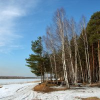 Март в бору :: OlegVS S