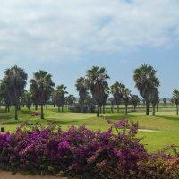 Португалия. Поле для гольфа. :: Лариса (Phinikia) Двойникова