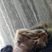 Фантик) :: Анастасия Боровицкая