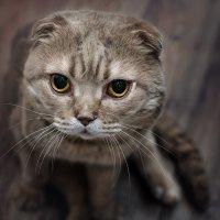 Кот, который любит фотографироваться) :: Лилия .