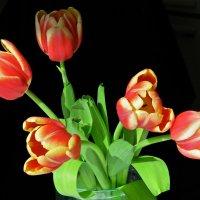 пестрые тюльпаны :: НАТАЛЬЯ