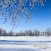 Зимняя прогулка :: Николай