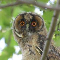 Эти глаза напротив. :: Андрей