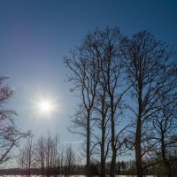 Мартовское солнце 3 :: Андрей Дворников