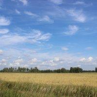 Леса поля и горы :: Николай