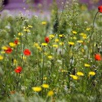 Улыбка весны. :: barsuk lesnoi
