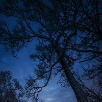Огни ночной Заволги :: Татьяна Афиногенова