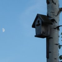 Домик для птиц. :: Aleksandr