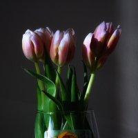 Тюльпаны :: Владимир Шадрин