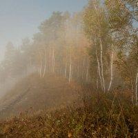 Берёзки в тумане... :: Сергей Герасимов