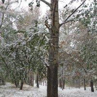 Снег на зелёных листьях :: S-Rover