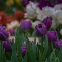 Скоро весна..но не сразу! :: Александра
