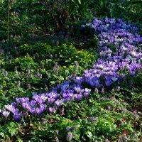 Весна :: Вера (makivera)