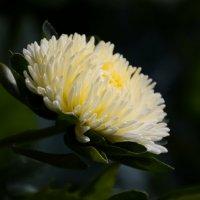 Цветы :: Дмитрий С.