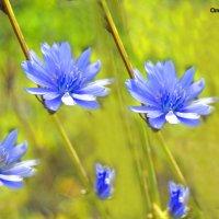 цветочки :: Олеся Б