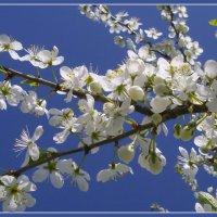 Аромат весны :: lady v.ekaterina