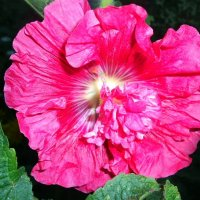 Аленький цветочек. :: Елена Бушуева