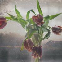 Тюльпаны :: Natalia
