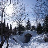 Зимняя сказка ... :: Лариса Корж