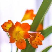 Весна пришла и в мой дом :) :: bajguz igor