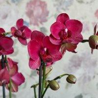 Орхидея. :: Борис Иванов