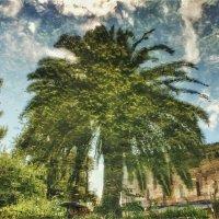 Пальмовый пруд. :: Вера Катан