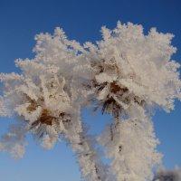 Цветы для Снежной королевы :: Татьяна Георгиевна