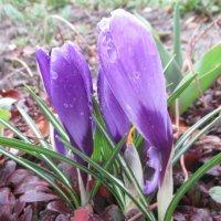 Идёт весна, идёт! :: Вячеслав Медведев