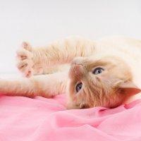 Любимый котик :: AllaSaa