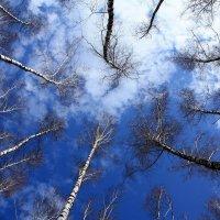 Небо :: Владимир Холодницкий