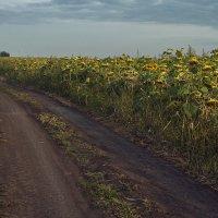 Хорошо в деревне летом) :: Юрий Клишин