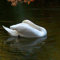 Белое очарование!... :: Лидия Бараблина